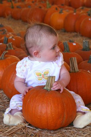 Pumpkin Patch 006E
