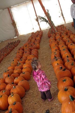 Pumpkin 010E