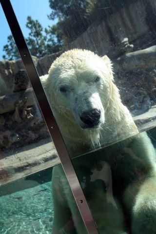 Zoo 083E