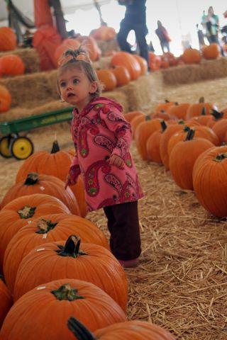 Pumpkin 003E