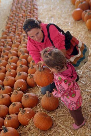 Pumpkin 013E