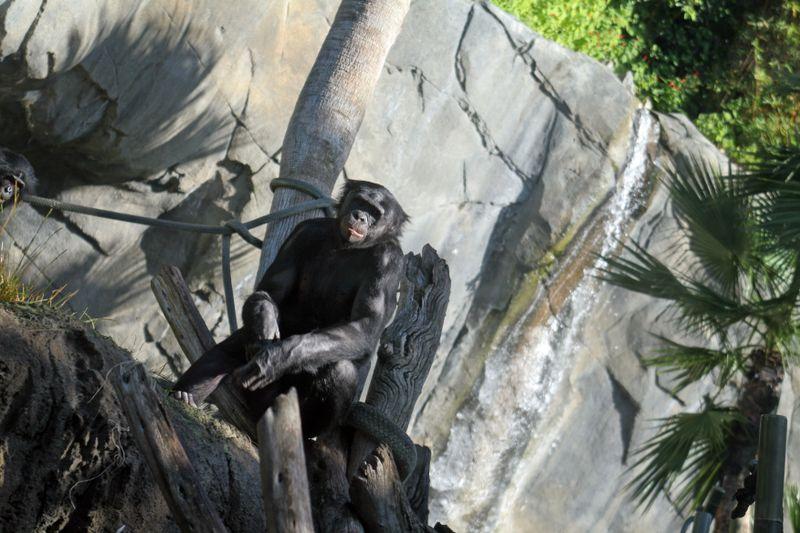 Zoo 067E