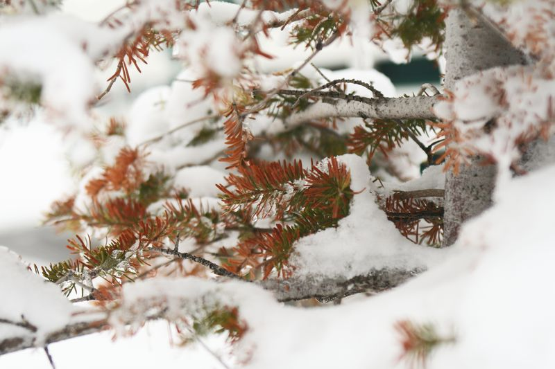 Snow Bunnies 058E